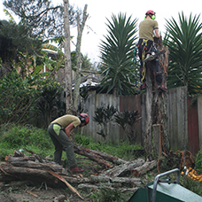two man tree removal in backyard