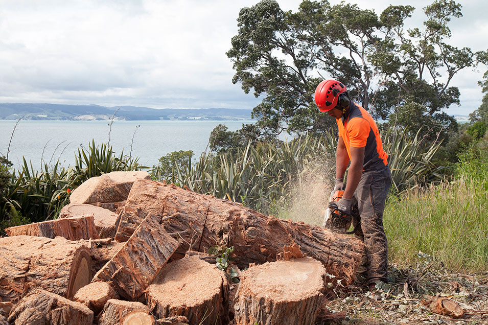 West Auckland Tree Removal