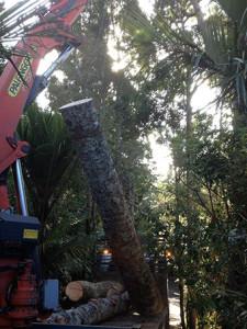tree felling machine working