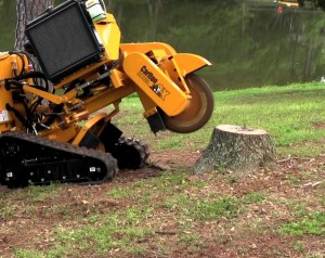 Stump removal machine working